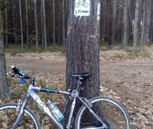 Można nie tylko po mieście, ale i po lesie. Wiele duktów leśnych jest już oznaczonych. Na przykład za Brynicą.