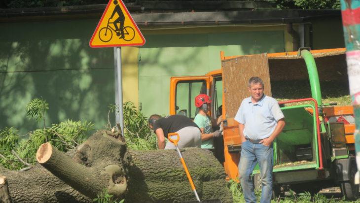 Ścinka drzew w rejonie Szkoły Podstawowej nr 4 w Michałkowicach. Z jednej strony wiekowe drzewa to zagrożenie w razie wiatru, z drugiej obniżają temperaturę. Bądź tu mądry.