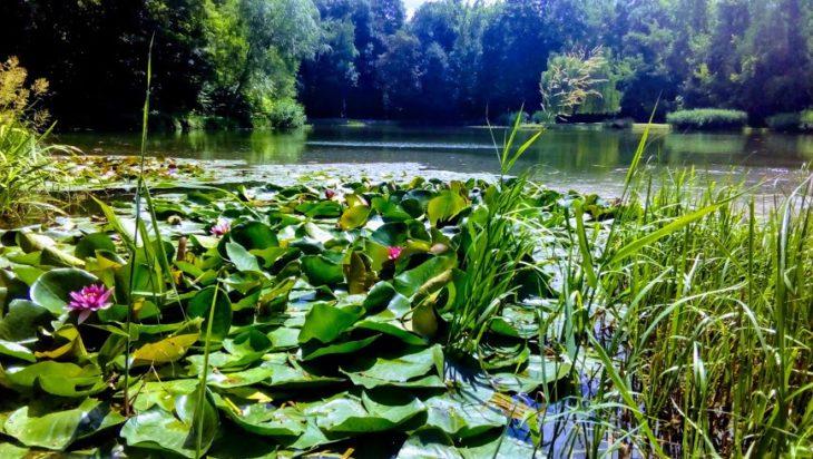 Są jeszcze miłe i chłodne miejsca w Grodzie Siemiona. Na zdjęciu staw w Parku Górnik.