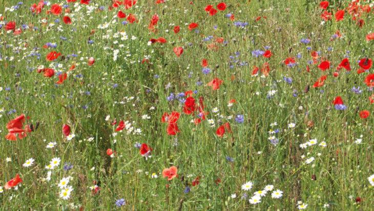 Czy kwietne łąki przez cały rok będą takie piękne?