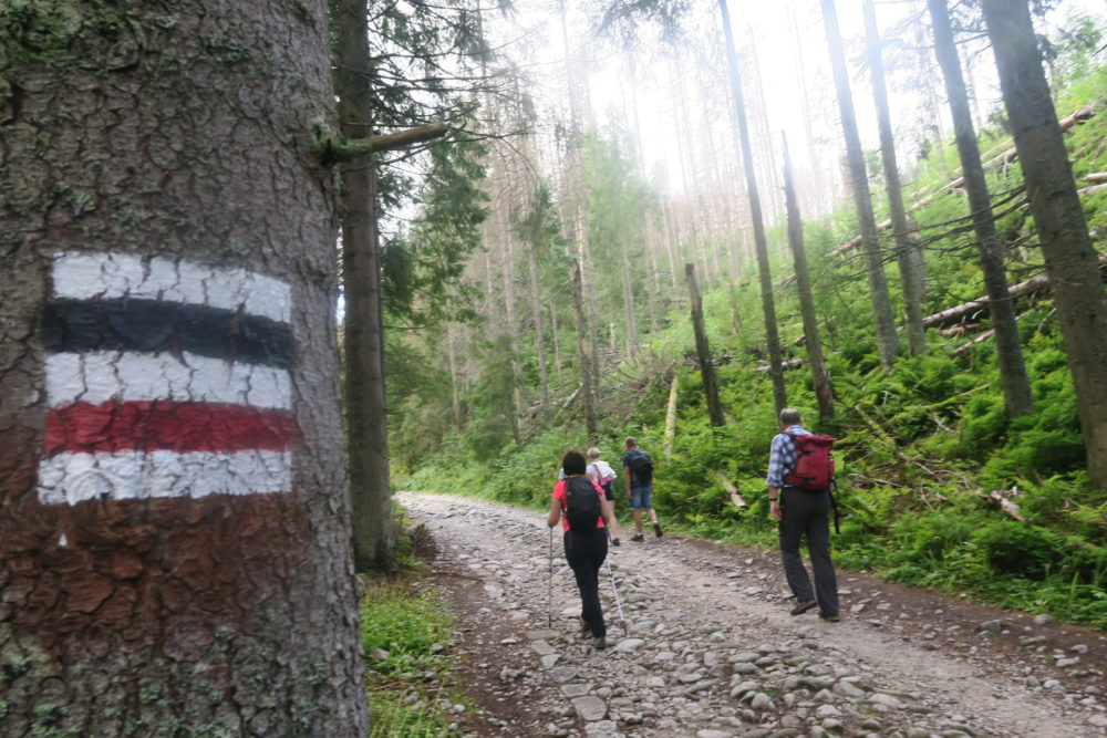 Szlak Doliną Suchej Wody w stronę Murowańca.
