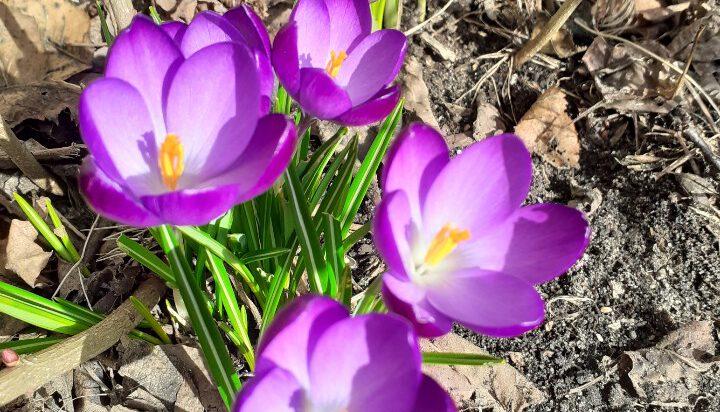 Wiosna 3 x się zaczyna