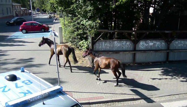Siemianowice: Zatrzymanie koni