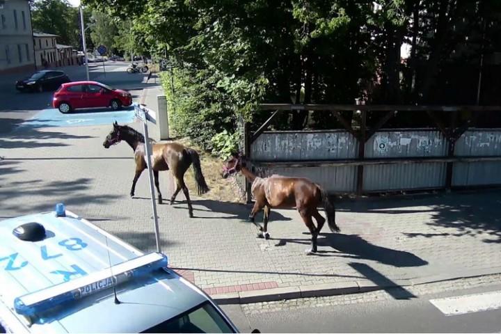 siemianowice ulica katowicka zatrzymanie koni