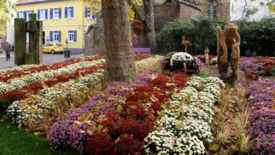 Siemianowice: Kupili i rozdają [Kwiaty za darmo]