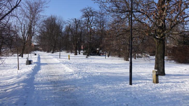 Siemianowice Śląskie Drzewa Zim