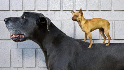 Psy pod większa kontrolą, ich właściciele pod groźbą wyższej kary