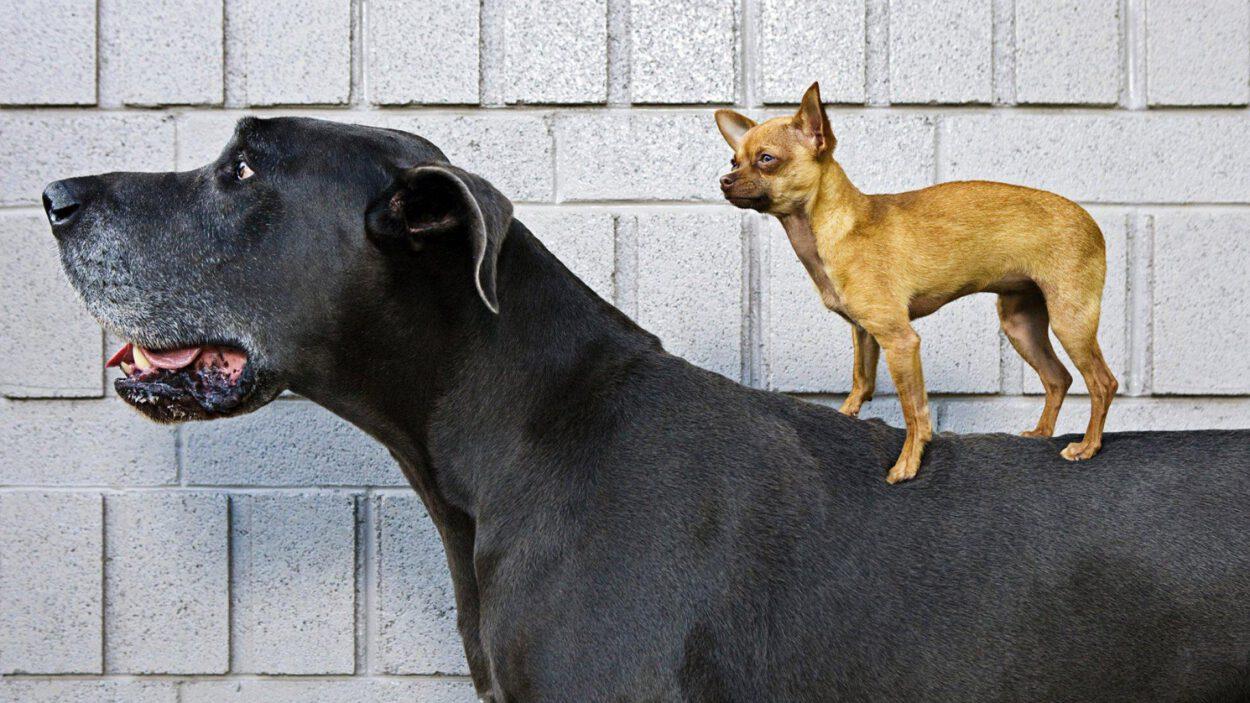 psy pod kontrolą