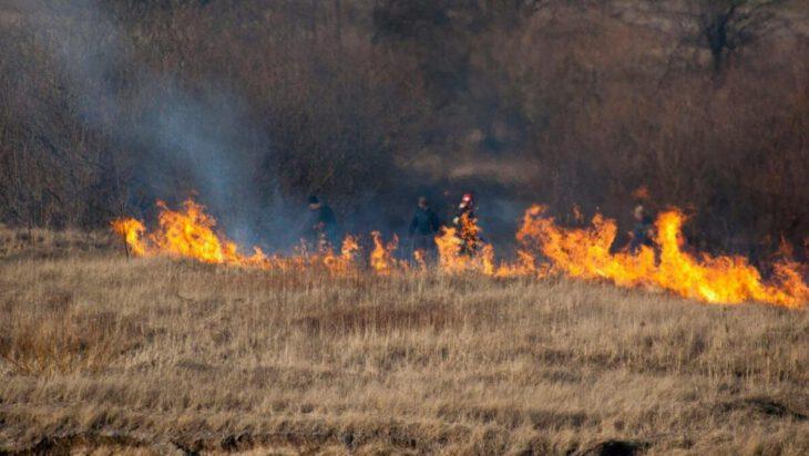 Za wypalanie traw można trafić do więzienia nawet na 10 lat.
