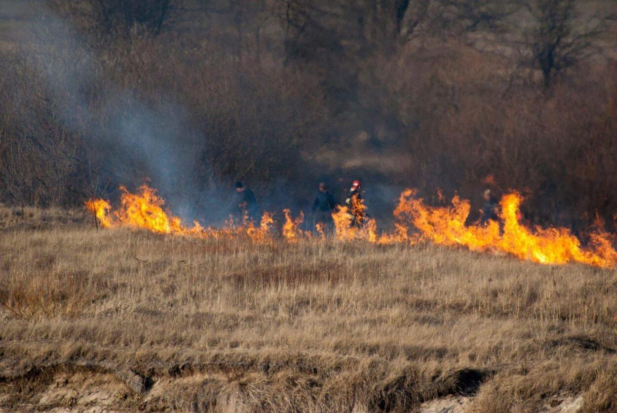 wypalanie traw siemianowice