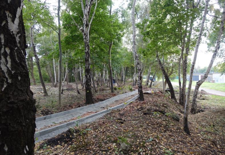 park leśny na tyłach alei młodych