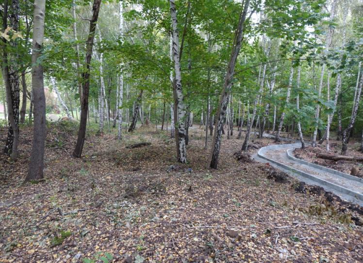 park leśny siemianowice