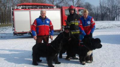 Jak psy ratują ludzi