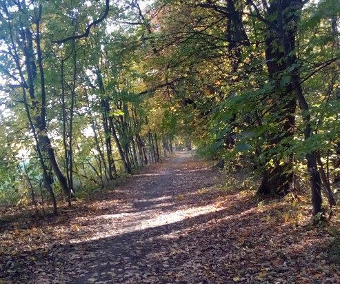 Piękne aleje spacerowe Bażantarnia
